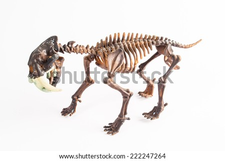 saber-toothed tiger skeleton - stock photo