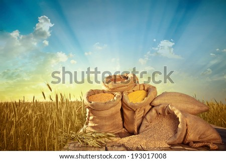 sacks of grain on the background field of ripe wheat - stock photo
