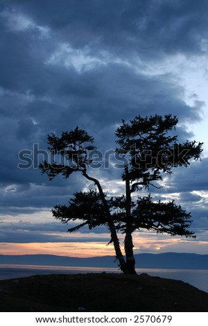 Sacred larch tree at Burkhan Cape on Olkhon Island on Lake Baikal in Siberia, Russia, at sunset