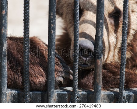 Sad bear in a cage - stock photo