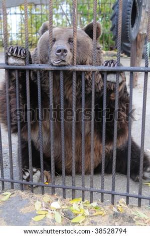 Sad bear in a zoo - stock photo