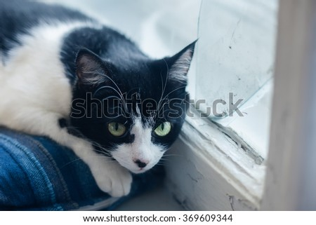 sad black white cat lying on bed at the window - stock photo