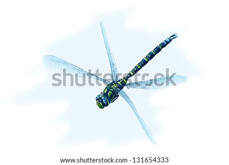 Sad blue dragonfly. Raster