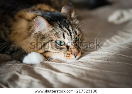 sad cat - stock photo