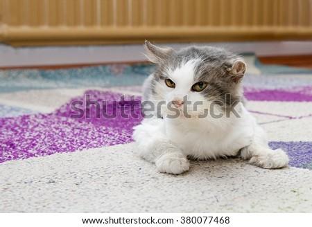 Sad cat in refuge. Cat, resting cat on a sofa,cute funny cat close up, young playful cat, domestic cat, relaxing cat  - stock photo