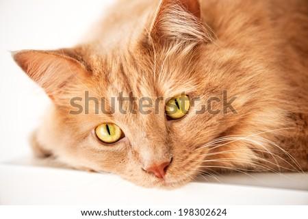 Sad cat is watching you - stock photo