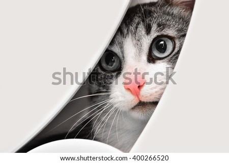 Sad cat looking from behind white dressing table. Black and white photo with selective-color effect. Only cat's nose is pink. - stock photo