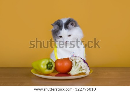 Sad cat on a diet before the emptiness of plate - stock photo