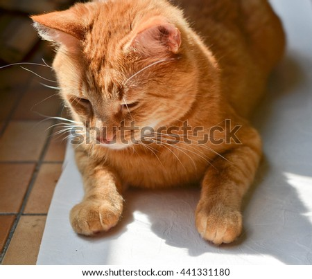 Sad cat waiting for something. Adopt a pet concept. - stock photo