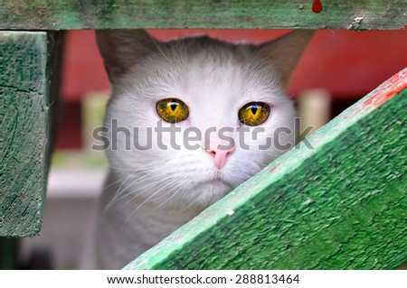 sad cat with unusual magically beautiful yellow amber eyes - stock photo
