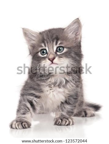 Sad cute little kitten isolated on white background - stock photo