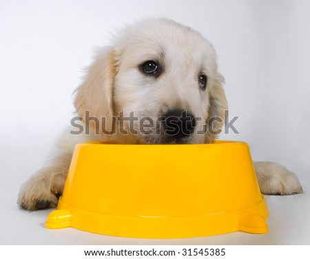 sad cute puppy waiting for food