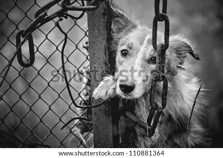 Sad dirty dog black and white on fence - stock photo