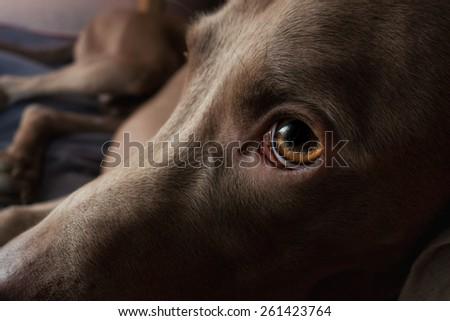 sad dog abandoned - stock photo