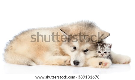 Sad dog embracing kitten. isolated on white background