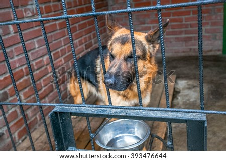 sad dog german shepherd in a cage - stock photo