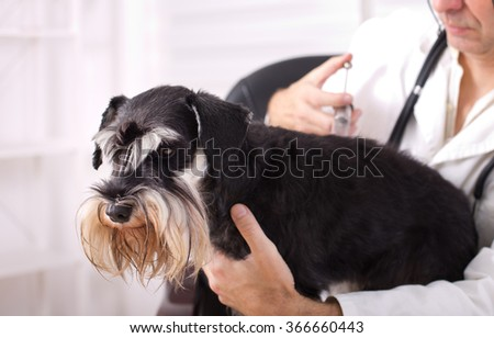 Sad dog having injection at veterinary ambulance