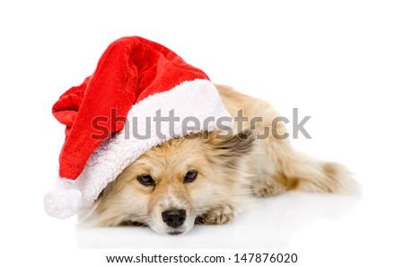 sad dog in red christmas Santa hat, isolated on white background  - stock photo