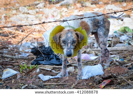 Sad dog in the trash in the village Aurobich - stock photo