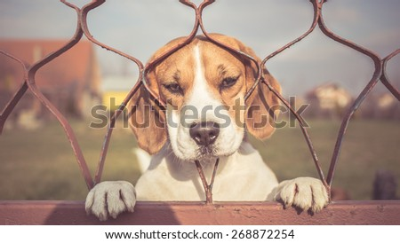 Sad dog looking through gate - stock photo