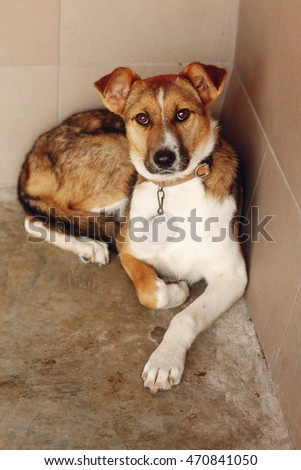Pugdog sits under little table toy stock photo 591342986 shutterstock - Dogs for small spaces concept ...