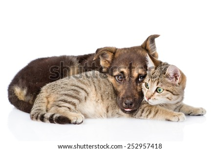sad dog lying with cat. isolated on white background - stock photo