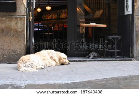 Sad dog waiting for his master at the threshold bar. - stock photo