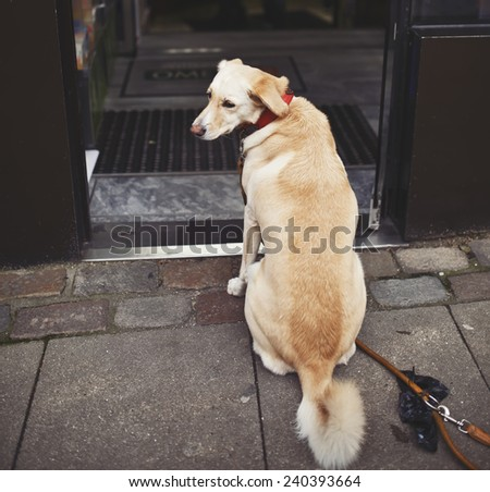 sad dog waiting for his owner outside