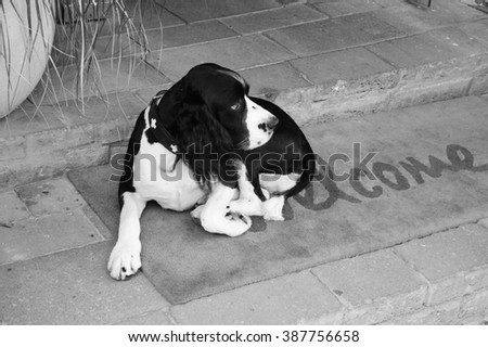Sad dog waiting for his owners on  Welcome home on mat. Aged photo. Black and white. - stock photo