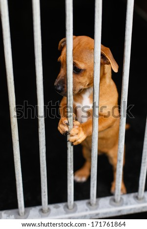 Sad dog with in a cage behind bars - stock photo