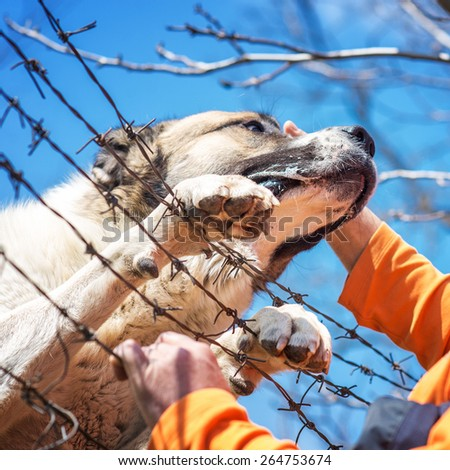 Sad dog with two clutches on barbed wire fence, human hand it pampers, best friends. Shallow depth of field.  - stock photo