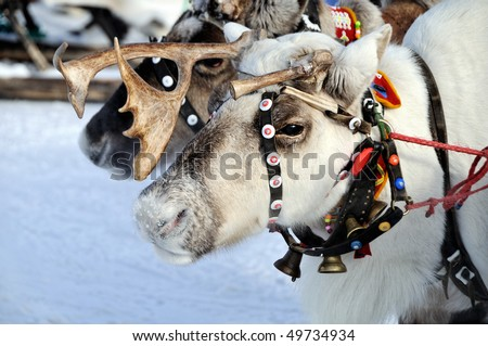 Sad face reindeer - stock photo