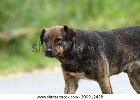 sad feral dog portrait while walking  on the street - stock photo