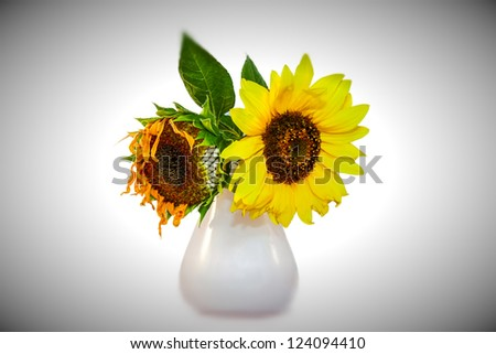 sad flowers in a vase - stock photo