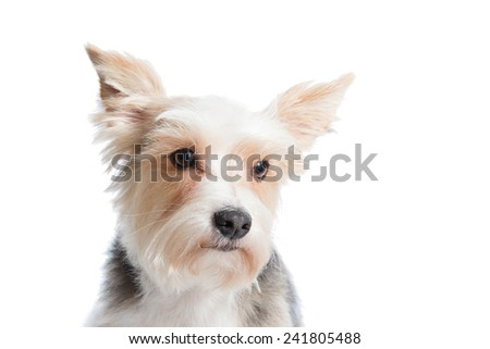 Sad funny puppy isolated on white background - stock photo