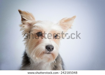 Sad funny puppy on blue background vignette - stock photo