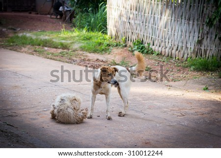 Sad homeless dog - stock photo