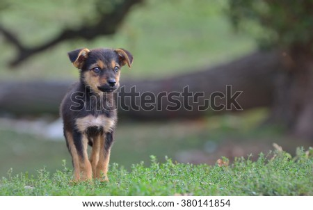 Sad homeless stray dog on field - stock photo