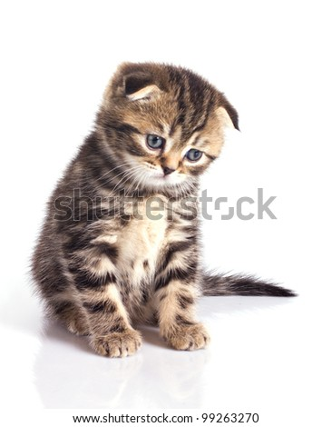Sad little kitten isolated on white background - stock photo