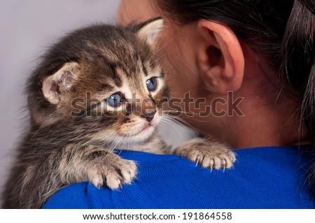 Sad little kitten on the girl's shoulder over grey background - stock photo