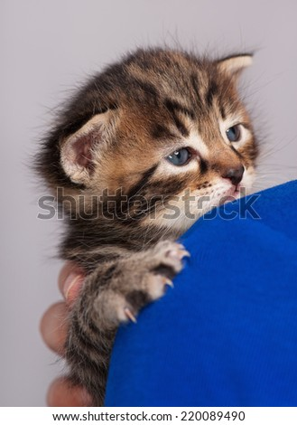 Sad little kitten on the woman's shoulder over grey background - stock photo