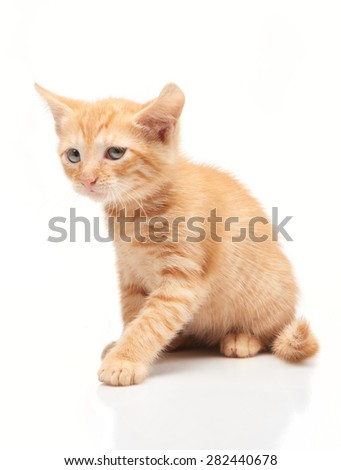Sad little red kitten isolated on white background