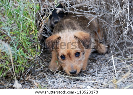 Sad lonely homeless puppy looking in the eyes - stock photo