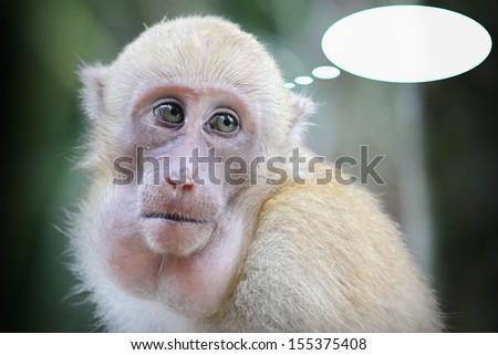 Sad monkey and think  - stock photo