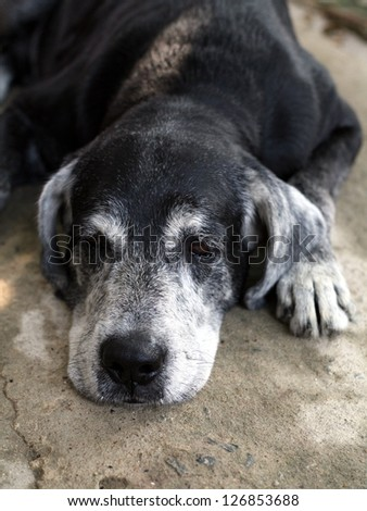 Sad old dog - stock photo