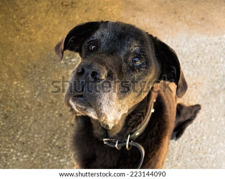 Sad old dog needs a new home. Face, portrait. - stock photo