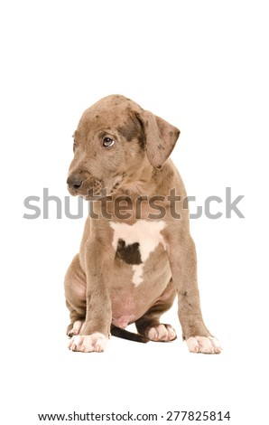 Sad pit bull puppy sitting isolated on white background - stock photo