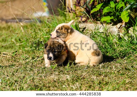 Sad Photo Of A Dog Eating Grass