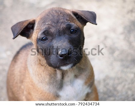 Sad puppy face stock images royalty free images vectors sad puppy face voltagebd Gallery