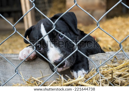 Sad puppy in cage waiting for adoption  - stock photo